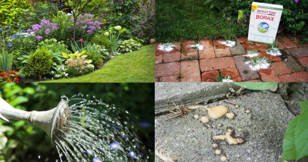 5 Clever Borax Uses For the Garden