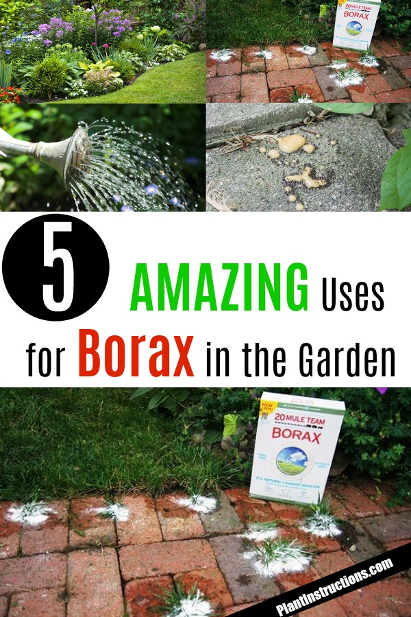 borax uses for the garden
