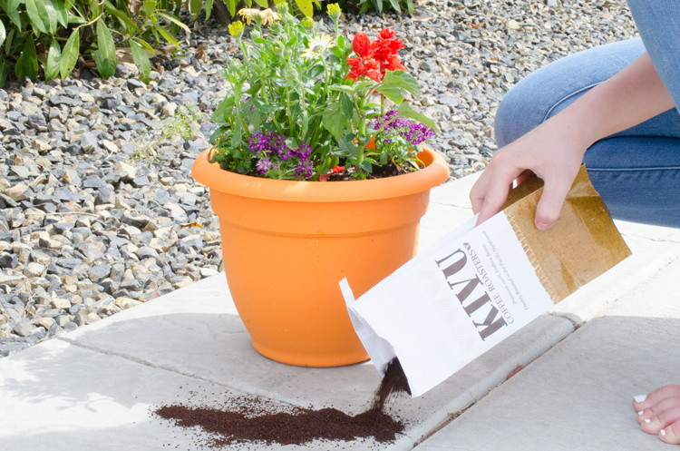 coffee grounds to deter pests