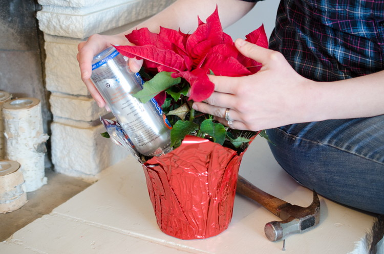 plant watering trick
