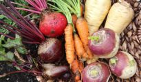 What to Plant in October: A Vegetable Growing Guide
