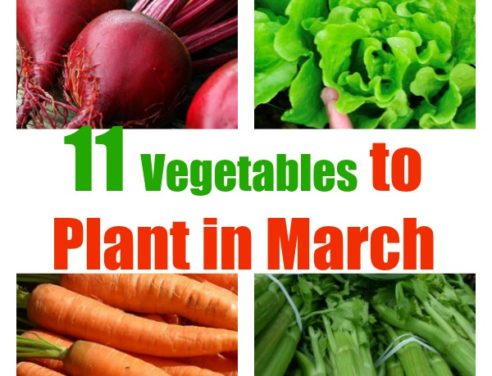 What to Plant In March: A Guide to Planting & Growing in Spring