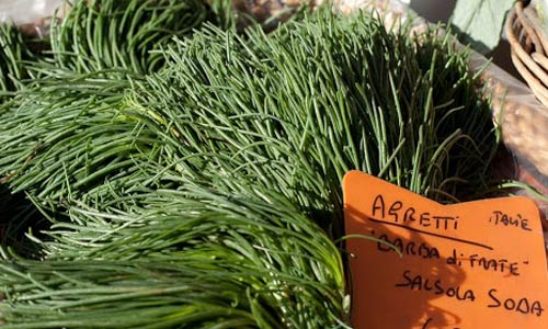 How to Grow Agretti, AKA Salsoa Soda