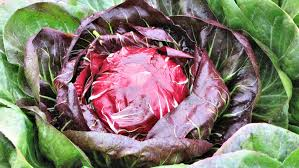 Planting Radicchio – How to Grow Radicchio in The Garden