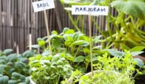 How to Grow Marjoram Indoors