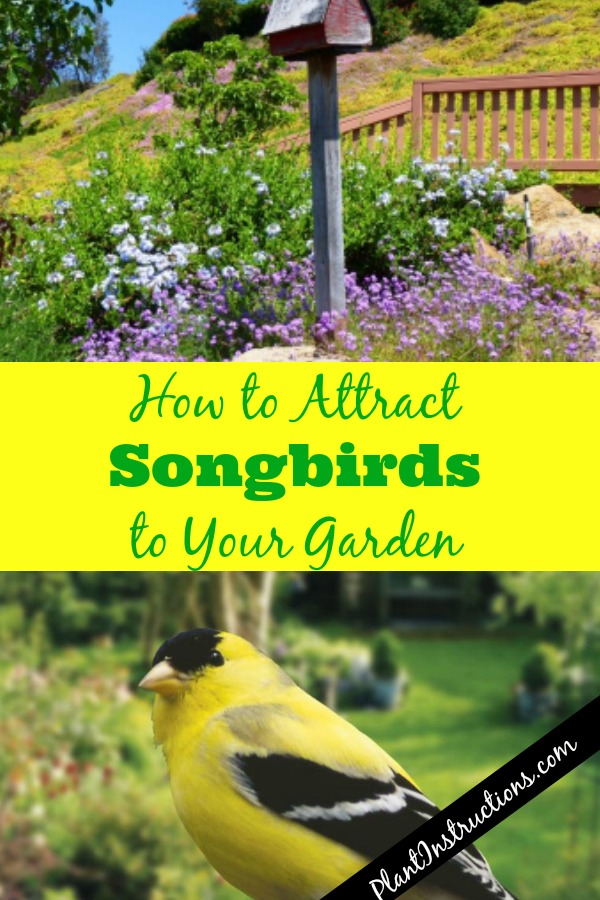 How to Attract Songbirds