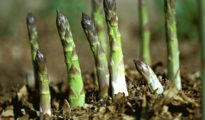 5 Perennial Vegetables To Plant Now and Enjoy Forever