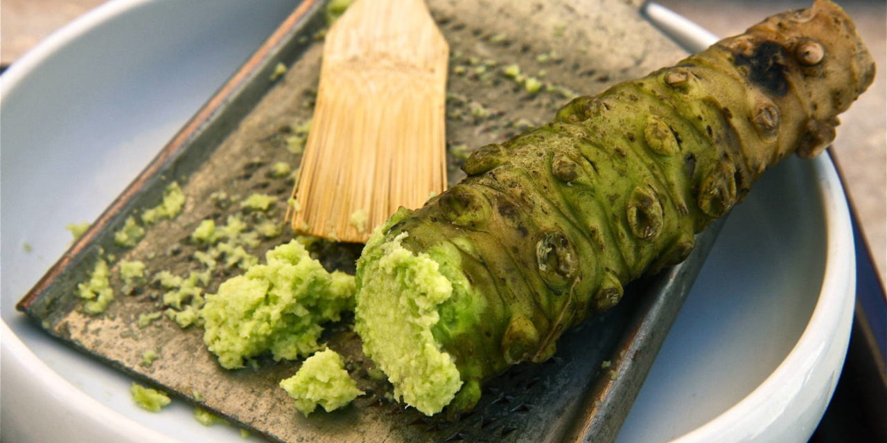 How to Grow Wasabi Root & Wasabi Plant Info