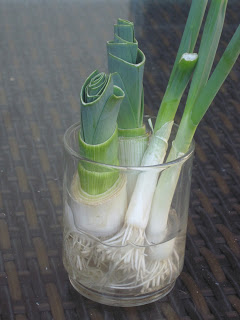 leeks regrown in water