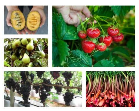 7 Fruits That Grow in The Shade