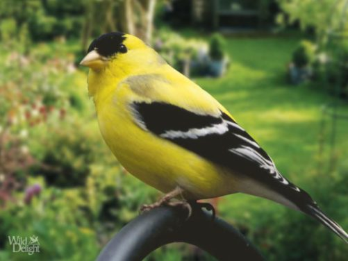 How to Attract Songbirds to Your Garden
