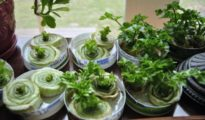 10 Water Regrown Veggies You Can Grow Right Now