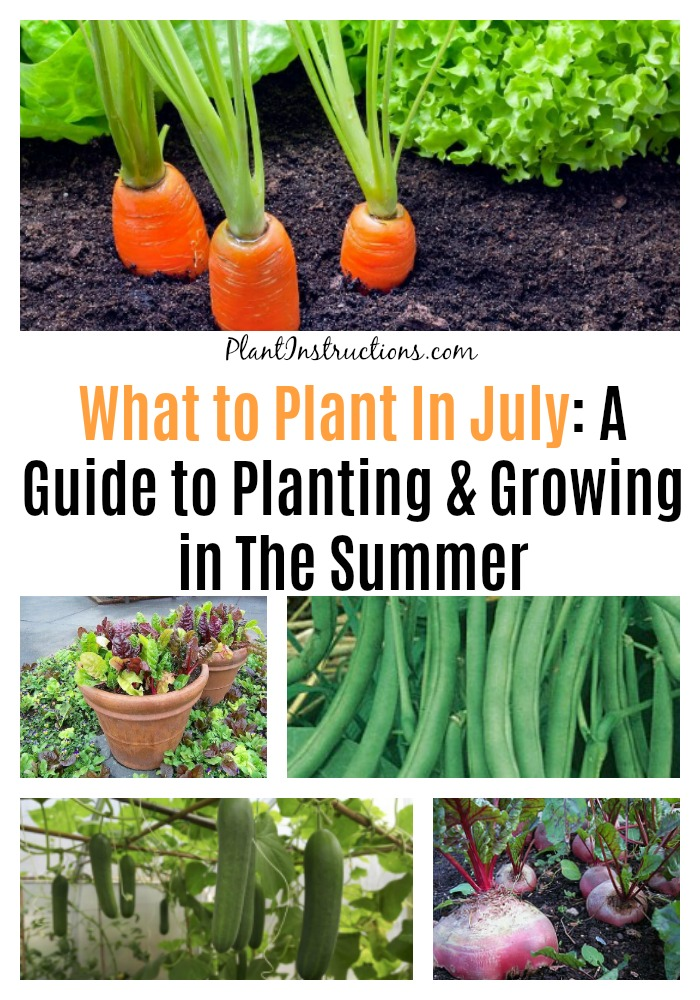What to Plant In July