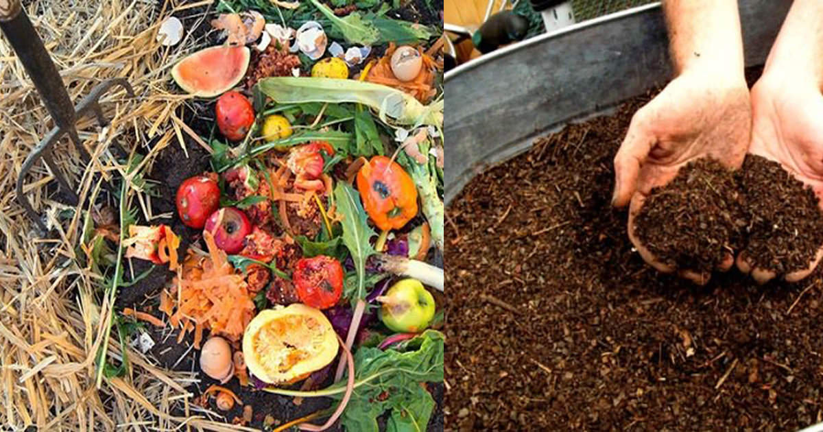 What Can You Compost – A Simple Guide to Composting
