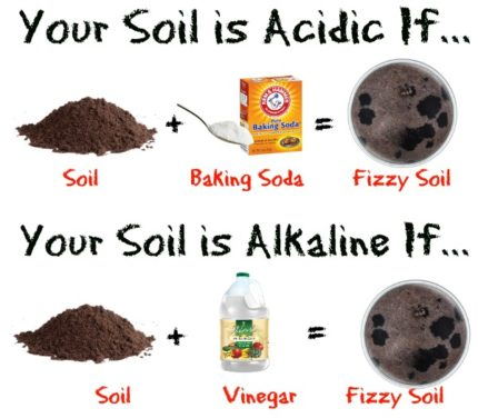 How To Test Soil pH Without a Kit