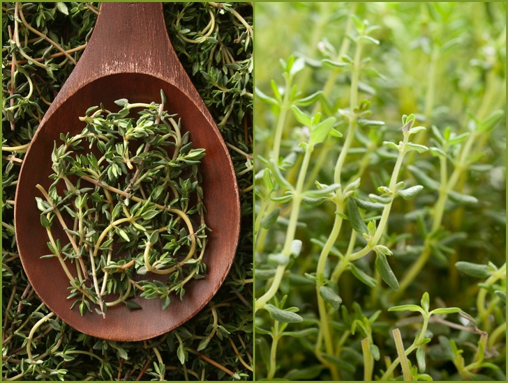 Thyme Varieties: How to Grow Different Types of Thymes