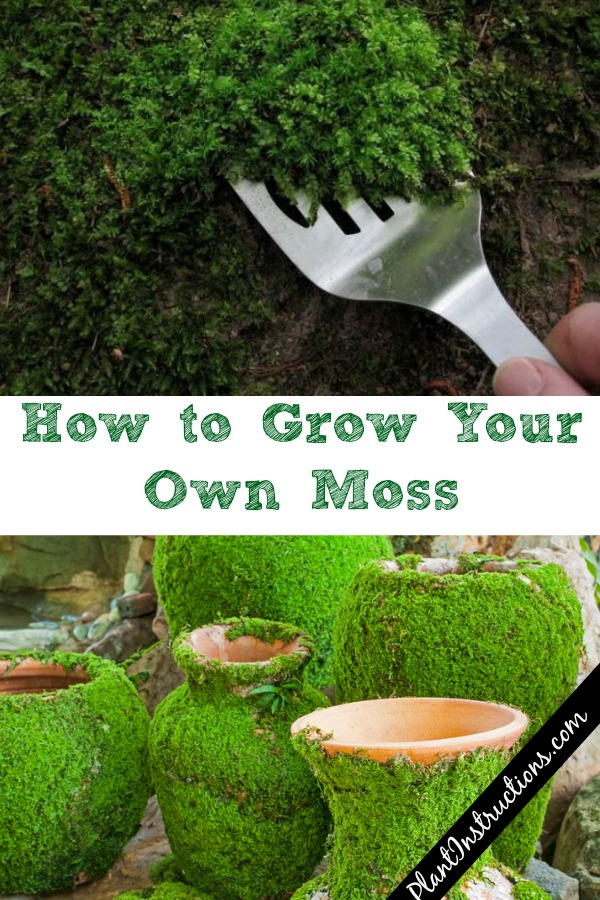 Grow Your Own Moss
