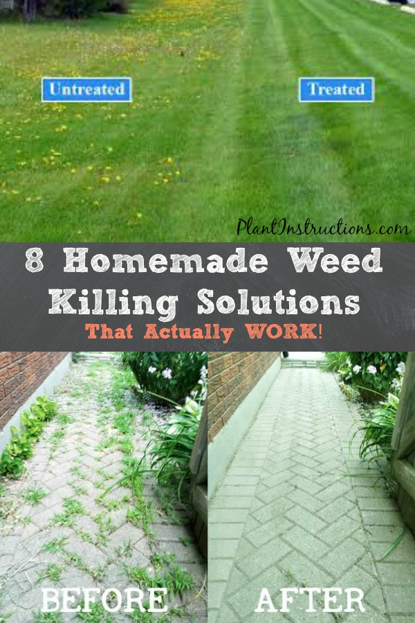 Homemade Weed Killing Solutions