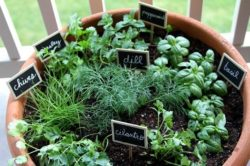 Herbs That Grow Together In a Pot