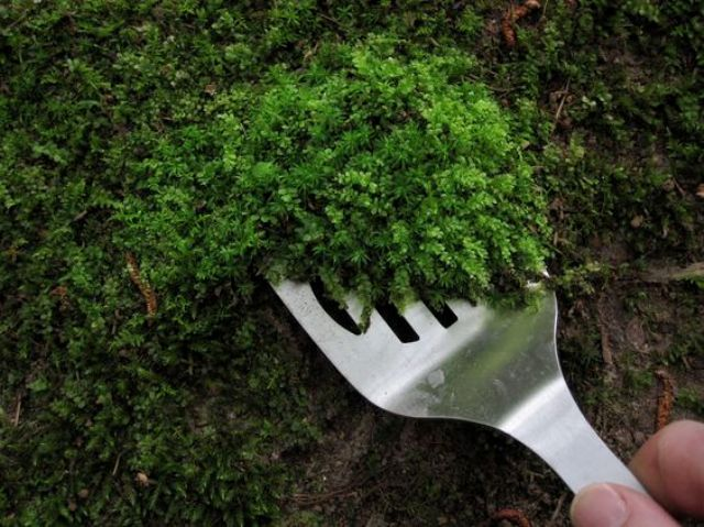 How to Grow Your Own Moss