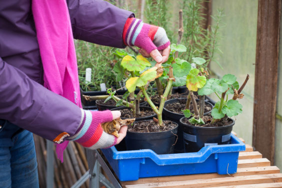 8 Must-Follow Winter Gardening Tips