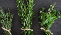 Drought Tolerant Herbs: Herbs That Thrive in Dryness