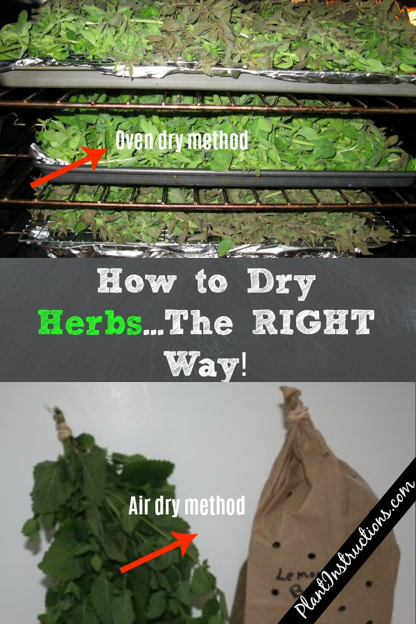 How to Dry Herbs The Right Way
