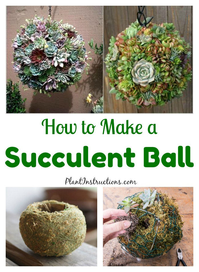 How to Make Succulent Balls