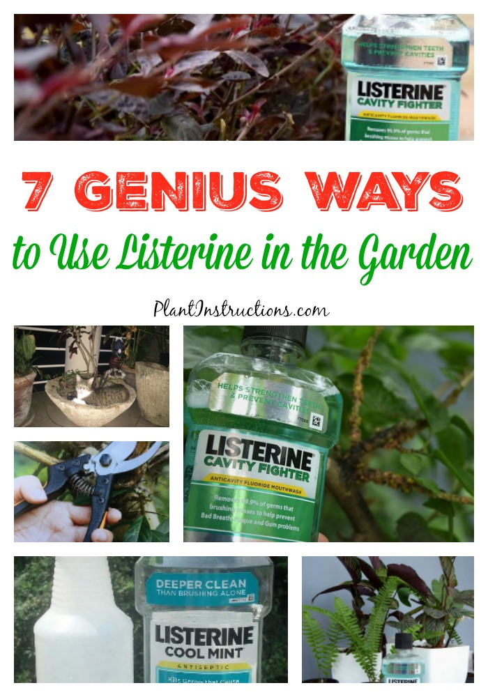 Listerine in the Garden