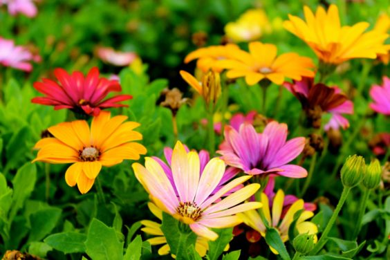 How to Plant Flowers For Beginners