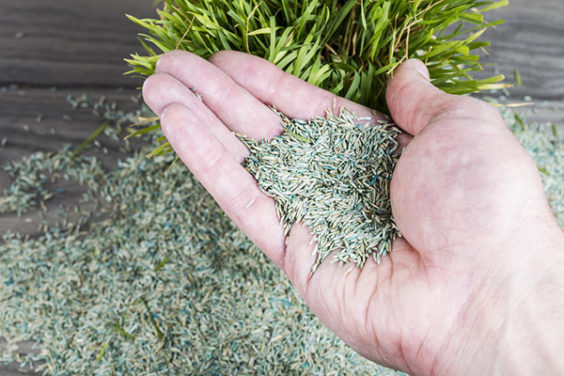 How to Plant Grass Seeds