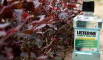 7 Ways to Use Listerine in the Garden
