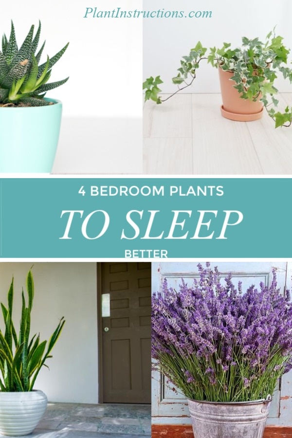 Best Bedroom Plants