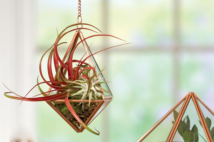 air plant pet friendly houseplants