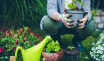 7 Gardening Mistakes Every Beginner Makes