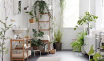 10 Indoor Plants You Can't Kill