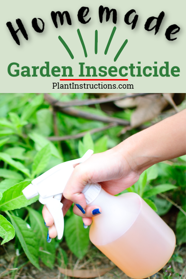 This all natural DIY garden insecticide is powerful enough to keep bugs, critters, and weeds at bay, all while being completely safe for your pets and family!  #diyinsecticide #gardeninsecticide #plantinstructions