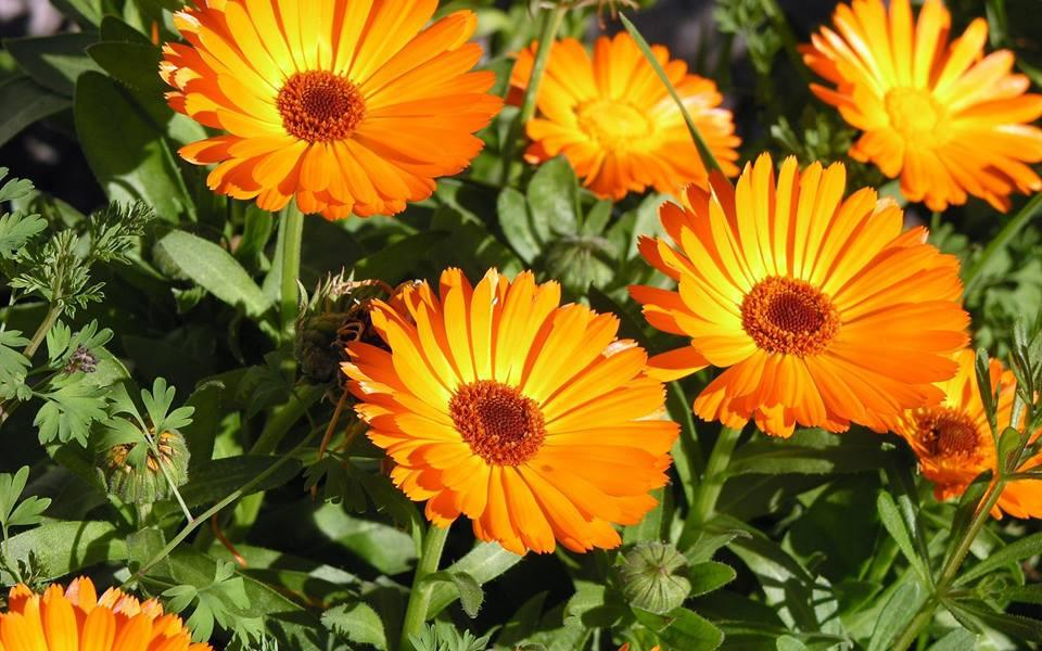 6 Vegetable Garden Flowers You Can Grow