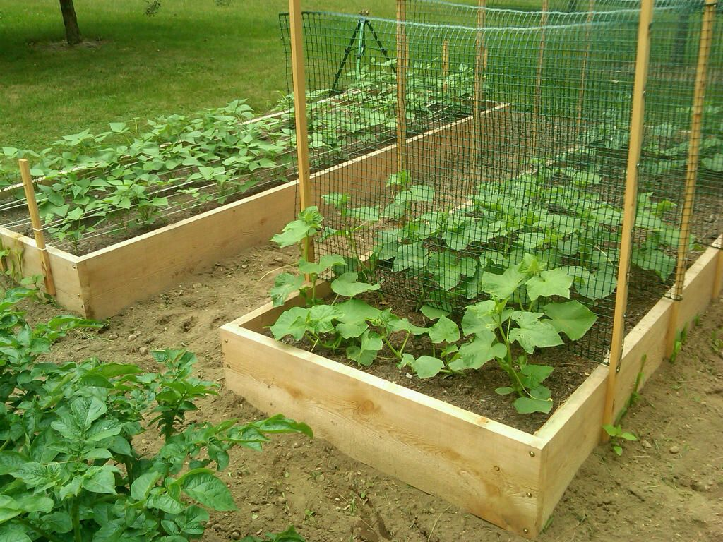How to Trellis Zucchini - Plant Instructions