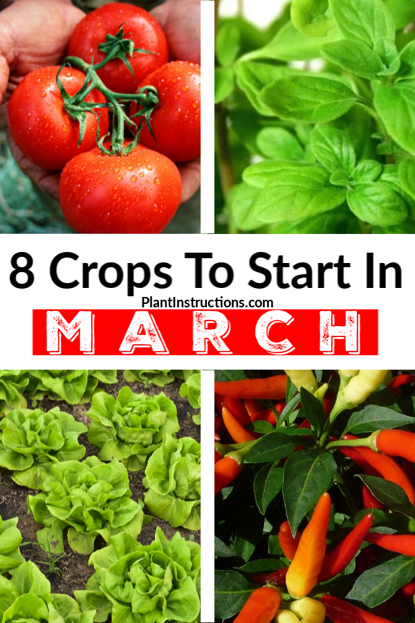 Crops to Start in March