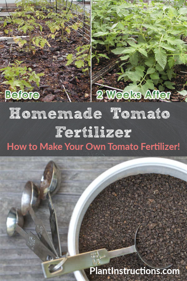 How to Make Tomato Fertilizer