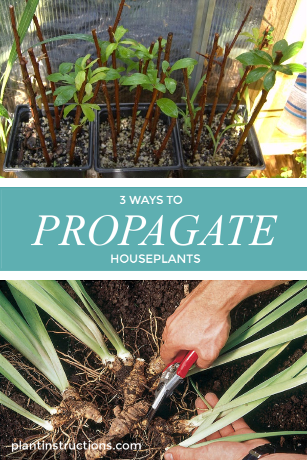 If you love a house filled with plants, then you absolutely need to know how to propagate houseplants! #propagatehouseplants #plantinstructions