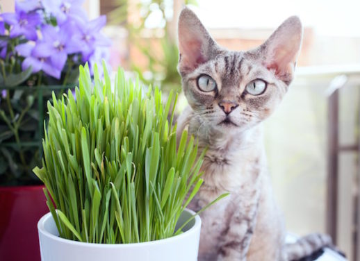 How to Grow Cat Herbs