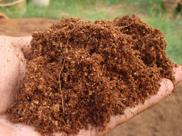 What is Coconut Coir