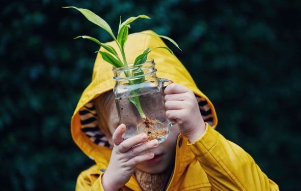 What Are Some Plants That Grow in Water?