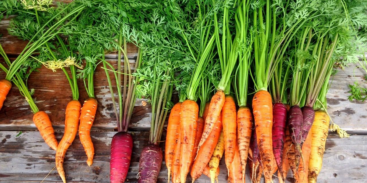 Carrot Varieties: What Are the Most Popular Varieties of Carrot?