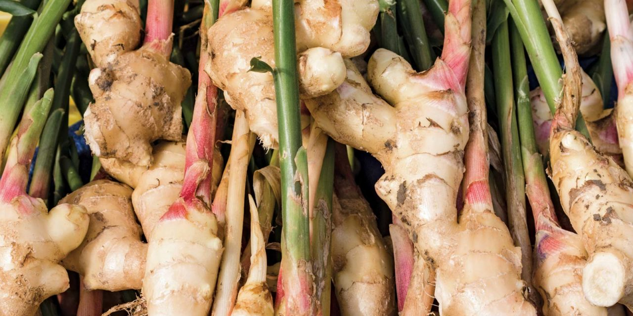 What is a Rhizome?