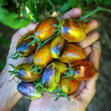 10 Unique Fruits and Vegetables You Can Grow