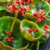 5 Unusual Houseplants You Never Knew About
