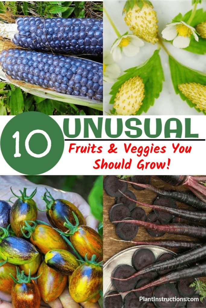 Unusual Fruits and Vegetables